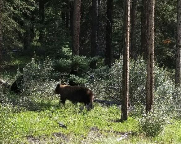 Bear! (2)
