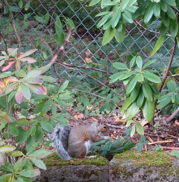 squirrel-2